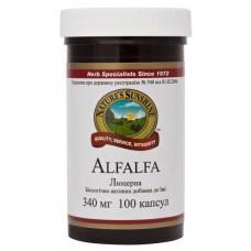 Люцерна/ Alfalfa